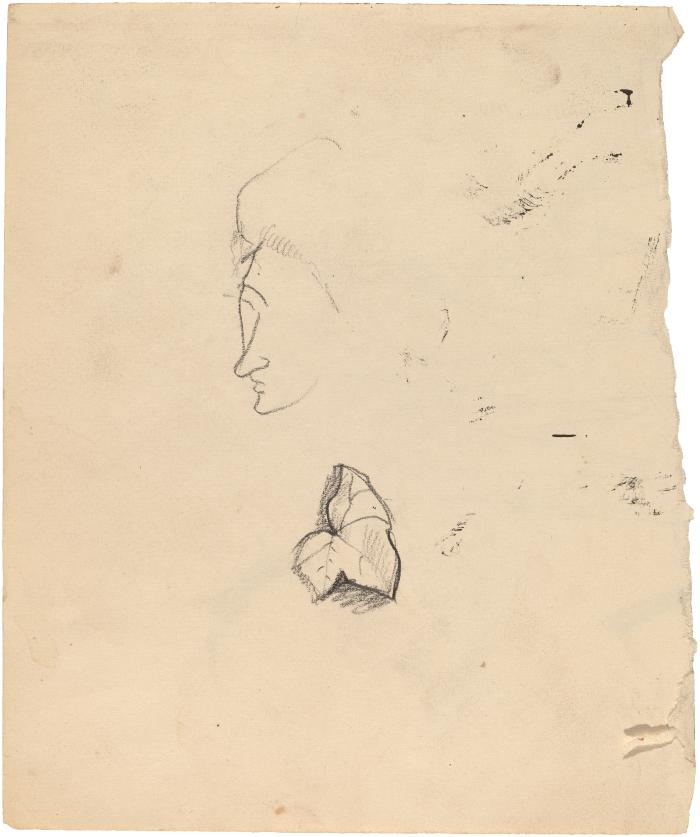 [Head / leaf]