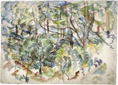 [Forest interior]