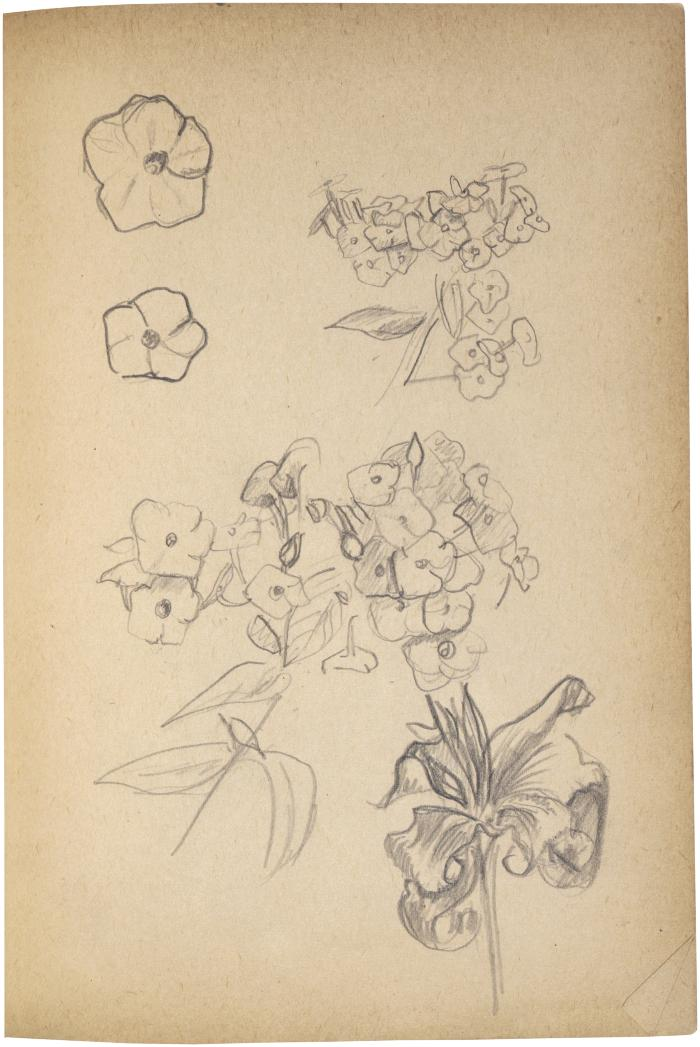 [Flower studies] The Scribble-In Book, page 63