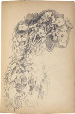 [Flowering plants] The Scribble-In Book, page 65