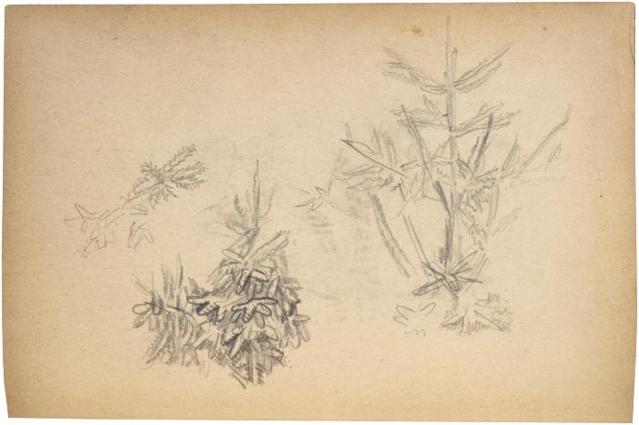 [Foliage] The Scribble-In Book, page 67