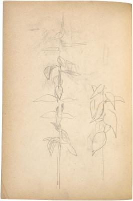[Plant studies] The Scribble-In Book, page 64